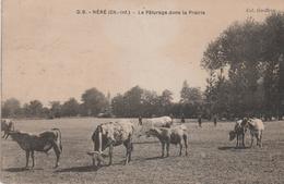 17 NERE LE PATURAGE DANS LA PRAIRIE - France