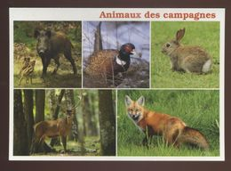 Animaux Des Campagnes : Laie Et Ses Marcassins, Faisan, Lapin, Cerf, Renard - Animals