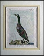 Der Pelikan (le Jopskarfr Ou Pelican Noir), Kolorierter Kupferstich Von Olafsen Aus Atlas Du Voyage En Islande Von 1802 - Lithographien