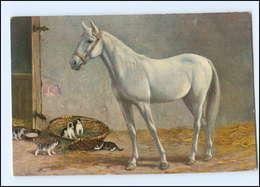 U6627/ Pferd Und Katzen AK 1923 - Pferde
