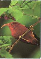 Bird, I'iwi, Scarlet Honeycreeper - Birds