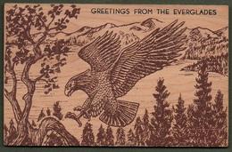 """0439 """"GREETINGS FROM THE EVERGLADES - ILLUSTRAZIONE PIROGRAFICA SU TAVOLETTA IN LEGNO"""" CART. ORIG. SPED. 1991 - Cartoline"""