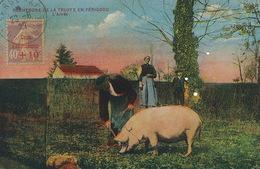 Carte Postale Cochon Truffe Perigord   Avec Timbre Semeuse Caisse Amortissement  Vers Cuba Camaguey 1929 - Storia Postale