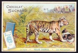 CHROMO Chocolat SUCHARD Le Tigre Tiger       Felis Tigris  Animaux  Animals  Serie 75 - Suchard