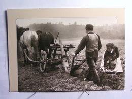 Agriculture - Le Labour - La Charrue - Landbouw
