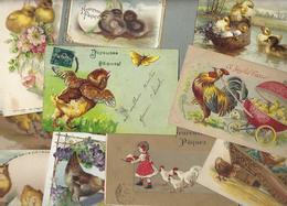 Lot 1706 De 10 CPA Poussins Coq Poules Dont Gaufrés Déstockage Pour Revendeurs Ou Collectionneurs - 5 - 99 Cartoline