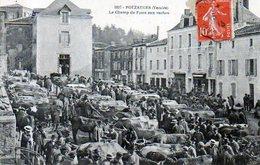 85 POUZAUGES - Le Champ De Foire Aux Vaches - Pouzauges