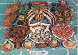 POSTAL DE GALICIA DE LOS MARISCOS GALLEGOS - COQUILLAGES - SHELLS-FISH - Pescados Y Crustáceos