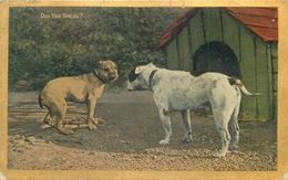"""""""DID YOU SPEAK"""" FEATURING 2 DOGS ~ POSTED IN 1907 #85630 - Dogs"""