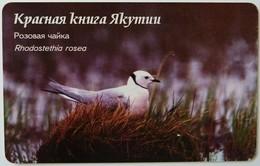 RUSSIA / USSR - Yakutsk - Yakutia - 100u - Pink Pigeon - Rhodostethia Rosea - Chip 23 - VF Used - Russie