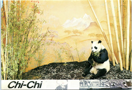 Natural History Museum, Giant Panda, Chi-Chi - Animals
