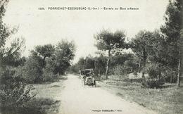 Pornichet (190), Entrée Du Bois D'Amour, Jolie Carte - Pornichet