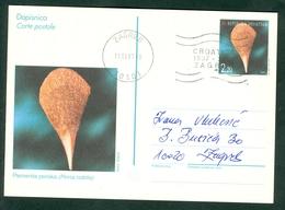 Croatia 1997 Stationery Nr. 3 CROATICA Shell Pinna Nobilis Letter Cover - Croazia