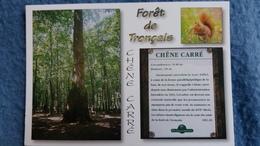 CPM ARBRE FORET DE TRONCAIS LE CHENE CARRE ECUREUIL  ED DU LYS - Arbres