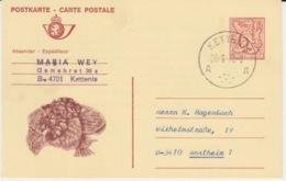BELGIUM USED CARTE POSTALE LION HERALDIQUE KETTENIS NORTHEIM - Stamped Stationery