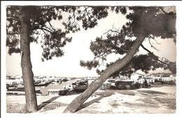 ANDERNOS. Cpsm N&B.    - Vue Sur Le Port De Pêche.   (Scans Recto-verso) - Andernos-les-Bains