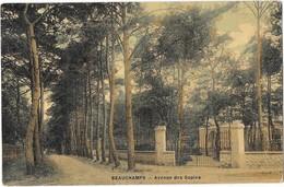 BEAUCHAMPS (95) Avenue Des Sapins Carte Toilée Couleur - Beauchamp