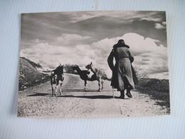 CPA  Les Chevres Albert MONIER (1957) Route Du Grand Air 1900  TBE - Breeding