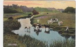 EIFEL TYPEN   Région WEYWERTZ - Butgenbach - Buetgenbach