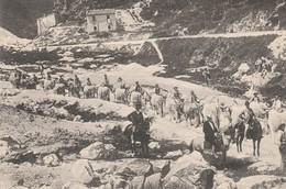 CAVE DI CARRARA - TRASPORTO DEI MARMI - Carrara