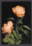 93229/ FLEURS, Pivoines, Petit Texte Au Verso - Fleurs