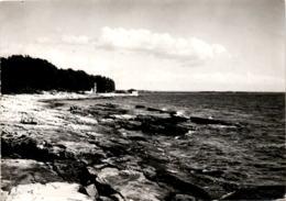 Savudria * 3. 6. 1957 - Croatia