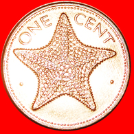 + STARFISH (1985-2004): THE BAHAMAS ★ 1 CENT 1987 MINT LUSTER! LOW START ★ NO RESERVE! - Bahamas