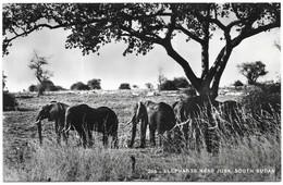 Soudan Elephants Near Juba, South Sudan Photo Stores (G. Karakashian) Khartoum, Sudan - Soudan