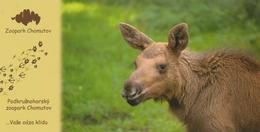 Zoopark Chomutov, Czech Rep. - Elk (moose) - Czech Republic