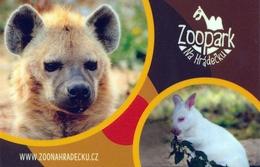 Zoopark Na Hradecku, Czech Rep. - Hyena, Wallaby - Czech Republic