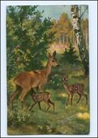 Y12138/ Rehe Schöne AK 1907 - Tierwelt & Fauna