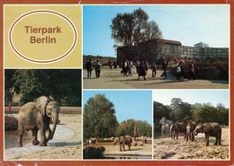 Tierpark Berlin, Germany - Elephant - Autres