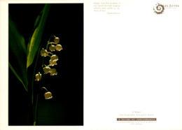 Muguet Porte Bonheur - Fleurs