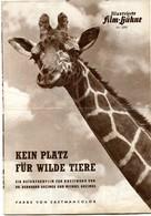 BAMBUTI - NO PLACE FOR WILD ANIMALS 1956 By GRZIMEK Original German Film Program - Films & TV