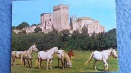 CPSM CHEVAL CHEVAUX HORSE ARLES 13 ABBAYE DE MONTMAJOUR ED SOFER 1973 - Chevaux