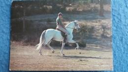 CPM CHEVAL HORSE CAVALOS DE RACA PORTUGUESA LUSITANO FOTO JORGE BARROS - Chevaux