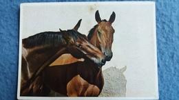 CPSM CHEVAL CHEVAUX HORSES BISOU ? ED HELDGE FARBFOTO - Chevaux