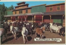 Slagharen - Shetland Ponypark [AA42-2.181 - Netherlands