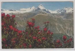 Rostblattrige Alpenrose - Fiori