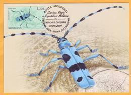 2019 Moldova Moldavie Red Book.Maxicard. Alpine Longhorn Beetle (Rosalia Alpina/Rosalia Longicorn) - Insects