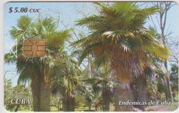 CUBA - PALM TREE - Cuba