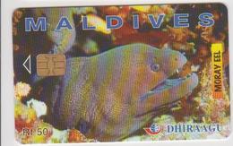 MALDIVES - MORAY EEL - 274MLDG - Maldives