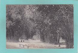 Old Postcard Of Jardim Botanico,Rio De Janeiro,Brazil,,Posted,Y42. - Rio De Janeiro
