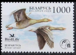 2009Belarus762Birds - Oiseaux