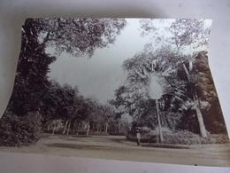 N/ Circa 1880 SAIGON VIETNAM JARDIN BOTANIQUE 16/21CM - Photos