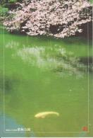 AKJP Japan: Takamatsu - Ritsurin Garden - Spring - Cherry Blossom - Carp - Lake - Japan