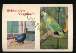 Rijs - Sybrandy's Vogelpark - Blauwvoorhoofds-Amazone - Koningsglans  Fazant [AA42-4.712 - Pays-Bas