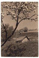 YUGOSLAVIA, SLOVENIA, SPRING IN POHORJE, 1947, COTTAGE - Slovenia