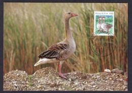 4.- SWITZERLAND 1995 MAXIMUM CARD BIRDS  Greylag Goose (Anser Anser) - Oies