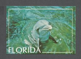ANIMALS - ANIMAUX - FLORIDA PORPOISE - MARSOUIN DE  FLORIDE - A PLAYFUL PORPOISE WELCOMES VISITORS WITH SMILE IN FLORIDE - Autres